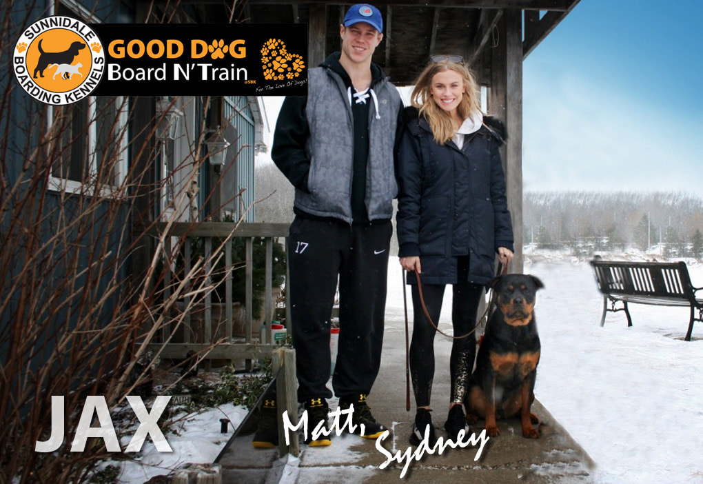 GOOD DOG Board N' Train - Sunnidale Boarding Kennel